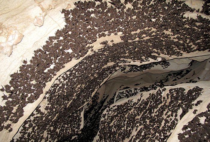 Fern Cave National Wildlife Refuge Wiki