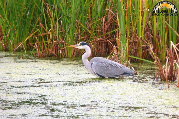 Leopold Wetland Management District
