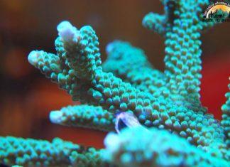 Northwestern Hawaiian Islands Coral Reef Ecosystem Reserve