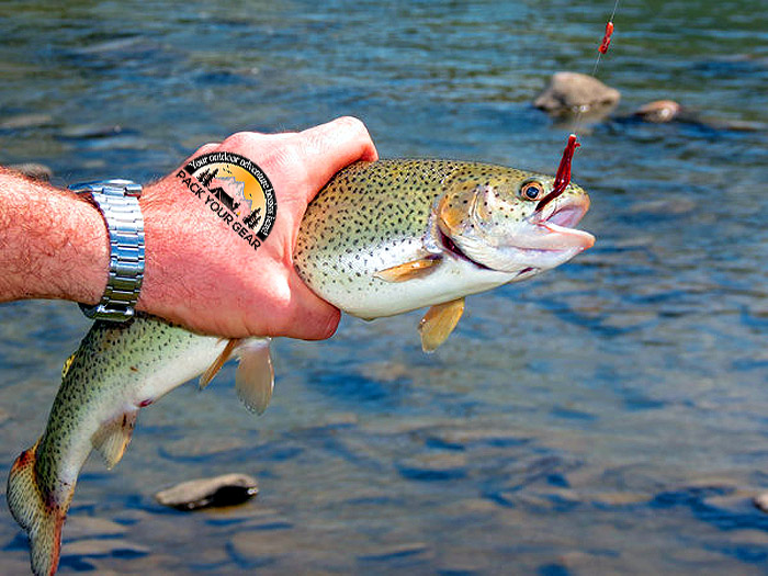 What Is Trout Fishing?